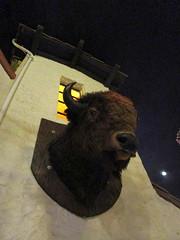 Buffalo Head (BunnyHugger) Tags: buffalo casabonita colorado denver mexican restaurant