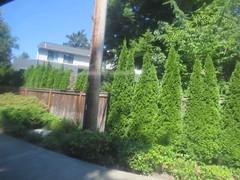 IMG_8359 (Andy E. Nystrom) Tags: bellevue washington wa bellevuewashington