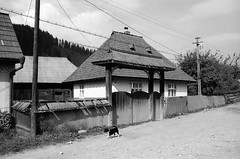 The lonely walker (Drehscheibe) Tags: nikonf2 kodaktrix400 analogica street dogs blackwhite haus portal fence film35mm film