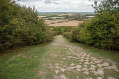 The way down (christina.marsh25) Tags: beaconhill ironagehillfort hampshire downs chalkland