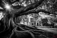 Camperdown Cemetary (eggwah123) Tags: cementary tree street streetphotography australia oldhouse oldbuilding blackandwhite monochrome monotone lightroom lightroomblackandwhite sydney sydneystreet sony sonyemount fe1635mmf4 fe1635mm variotessar a7rii sonya7rii starburst ultrawideangle