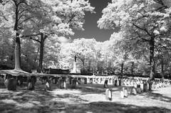 Oak Grove cemetery (ewan.osullivan) Tags: bw ir graveyard tripod blackandwhite monochrome r72 cemetery oakgrovecemetery medford warmemorial trees