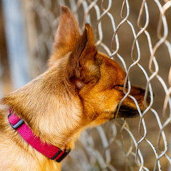Apollo15Sep201815.jpg (fredstrobel) Tags: dogs pawsatanta atlanta usa animals ga pets places pawsdogs decatur georgia unitedstates us