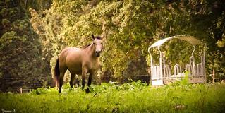 Horse - 5889