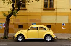 CHILI, Valparaiso (asa perchman) Tags: beetle coccinelle chili valparaiso asaperchman christophetimmermans bruxelles nikon volkswagen ted bundy ann rule herbie chile