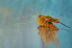 automne (Chocolatine photos) Tags: automne reflet bleu jaune feuille photo photographesamateursdumonde pdc pastel makemesmile minimaliste flickr nikon nature coloré stilllife symétrie