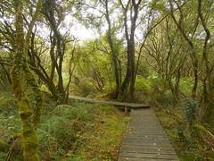 DSCN5690 (norwin_galdiar) Tags: bretagne brittany breizh finistere monts darrée nature landscape paysage