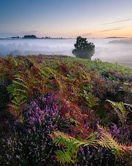 Rockford Common (2018) 2 (Stu Meech) Tags: the new forest sunrise heather ferns mist late summer nikon d750 1635 leefilters hampshire rockford common