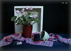 Fill Your Frame! (Esther Spektor - Thanks for 12+millions views..) Tags: stilllife naturemorte bodegon naturezamorta stilleben naturamorta compostition creativephotography artisticphoto tabletop spring cyclamen plant pot frame cup scarf ceramics silk wooden pattern ambientlight white pink green blue aquamarine cobalt black estherspektor canon