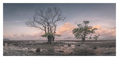 The dark side (Khun Jeremy) Tags: blue khaokhad thailand phuket mangrove moon