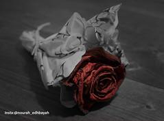 Broken Heart (Nourah.A.Edhbayah (Super Flower♥إظبيه)) Tags: nourah abdullah edhbayah q8 kuwait نوره عبدالله اظبيه الكويت