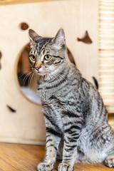 Javacatscafe08Sep20180419.jpg (fredstrobel) Tags: javacafecats javacatscafe atlanta places animals ga pets cats usa georgia unitedstates us