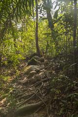 Camino hacia el río en Khao Sok National Park. Tailandia. (www.rojoverdeyazul.es) Tags: bambu bamboo khao sok national park thailand tailandia fotografía viaje autor alvaro bueno naturaleza nature forest bosque ramas branches