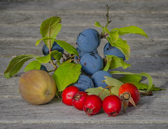 September mix (frankmh) Tags: berry acorn september hittarp skåne sweden