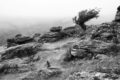 Bench Tor (Christian Hacker) Tags: benchtor granite blackandwhite bw mono monochrome hawthorntree outcrops dartmoor nationalpark devon uk mist fog drizzle rainy bleak barren lichen nature outdoors hike top canon eos50d tamron 1750mm landscape fern