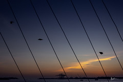 Different parallel, different story. (Robins Mathew Z) Tags: silhouette silence birds evening kochi fortkochi indiatravel incredibleindia fly