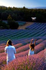 Lavender Dron (antoniojosehuertalopez) Tags: dron lavender lavanda women landscape sunset