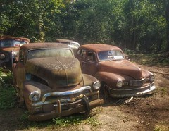 pack mentality....(HTT) (BillsExplorations) Tags: car truckthursday truck rust packmentality forsale old vintage field carlot four htt chevrolet buick freeport illinois oldcar oldtruck chevrolettruck
