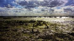 Low tide Mersea Island (sdmvqedd30) Tags: tidal lowtide mud sea sunlight wter boats moorings sky stumps seaweed merseaisland esseex coast rocks pebbles evening dusk canon