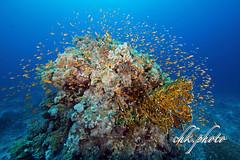 Underwater - a wonderful colorful world (chk.photo) Tags: dolphin nature scuba dive fish water diving tier underwater aegypt tauchen naturemasterclass animal naturewatcher