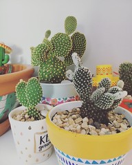 Cacti (lucyadunn) Tags: bunnyearcactus angelwingcactus opuntia cactuses cactus cacti's cacti