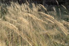 DN9A4804 (Josette Veltman) Tags: sallandseheuvelrug salland heuvelrug nijverdal holten holterberg natuurmonumenten nederland herfst overijssel canon landschap