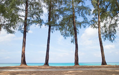 Kamala Beach (Pierre Pocs) Tags: kamala beasch trees ocean green houseinphuket