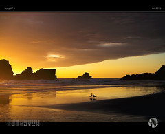 Togetherness (tomraven) Tags: seagulls gulls dancinggull tomraven dusk sunset glow golden silhouettes reflections beach coast coastal sun sea sky clouds landscape seascape q42018 sony a7ii