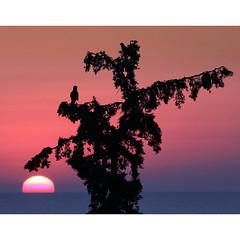 A really real dream (Robyn Hooz) Tags: creta dawn dream pensieri mare rami uccelli grecia birds uccello ramo branch branches horizon orizzonte