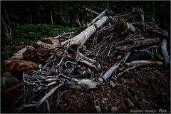 Fallen Trees... (SHADOWY HEAVEN Aya) Tags: 1708017ha0021