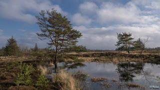 Langenhorner Heide 012
