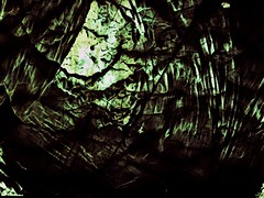 Spider Hole. (Steve.D.Hammond.) Tags: spider hole