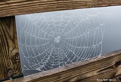 Spiderweb with dew (scottnj) Tags: spiderweb dock lake water board boards dewdrop dewdrops web rain weather scottnj scottodonnellphotography spider nature natural