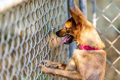 Apollo15Sep201837.jpg (fredstrobel) Tags: dogs pawsatanta pets atlanta animals usa ga places pawsdogs decatur georgia unitedstates us