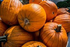 pumpkins-1_MaxHDR_Dehaze_Spot_Remove (old_hippy1948) Tags: pumpkins