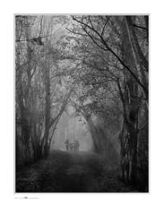 attenti al lupo ... (paolo paccagnella) Tags: bn blackandwhite territorio ambiente flickr foto fog monochrome veneto vallepadana italia phpph©