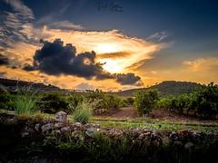 Puesta de Sol en la viñas (Raúl Gallego Huete) Tags: sunset puestadesol atardecer olympusomdem10markiii zuiko1442ez viñas vineyards viñedos landscape landscapephotography paisaje puesta de sol naturaleza cielo