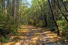 2018-08-26 Whistle Lake Trail 28 (03) (1024x680) (-jon) Tags: anacortes skagitcounty skagit fidalgoisland sanjuanislands washingtonstate washington pnw pacificnorthwest salishsea pugetsound acfl anacortescommunityforestlands whistlelake lake trail path 28 nikon nikonl22 tree douglasfir fern alder summer woods forest a266122photographyproduction hike hiking walk walking nikoncoolpixl22 coolpix l22