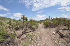Saguaro National Park (markusOulehla) Tags: arizona saguaronationalpark usa uswildlife markusoulehla oulehla nikon nikonnature nikond90 arizonalandscape saguaro cactus kaktus kakteen