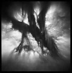 Hoh Rain Forest #3 (LowerDarnley) Tags: agfaisoly modifiedcamera transplantedlens holgalens flippedlens washington forks hohrainforest olympicpeninsula rainforest trees lush dark northwest