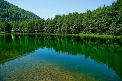 Lake reflections (meren34) Tags: reflection lake shadows water green forest fish cleat transparency