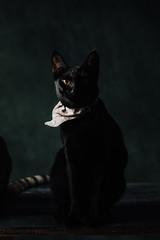 BEN_5478 (Ben Chen Photography) Tags: ç´è² cat cats benagexz benagexyz profoto d2 taiwan neko 貓 黑貓 虎斑