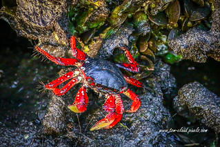 Colorful Crab on Rocks