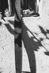 relaxing saw (werbaer2) Tags: annweiler garten saw säge shadows blackandwhite schwarzweis