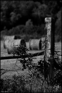 Noyen sur Sarthe (Sarthe)
