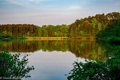 Koka Amphitheater Lake (Shawn Blanchard) Tags: trees green blue sky clouds water lake reflection yellow koka amphitheater cary north carolina nc