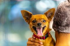 Apollo15Sep2018123.jpg (fredstrobel) Tags: dogs pawsatanta pets atlanta animals usa ga places pawsdogs decatur georgia unitedstates us