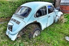 Alternate use! (Mike-Lee) Tags: vw volkswagen car blue flowers garden sheffield govuk sept2018 abandoned beetle wey34n sorned