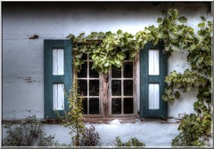 La fenetre sobre (aminekaytoni) Tags: fenetre windows window raam sobre strange vremd mur vert groen green raisin druiven vlanderen vlaams leuven genk borkerijk art artistic artistique light abstract canon 700d àd 50d limburg limbourg belgie nederlands netherlands belgium