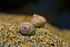 Shells (pstenzel71) Tags: frankreich landschaft trevoutreguignec shell darktable bokeh